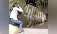 أسد ينهش ذراع حارسه بحديقة حيوان في باكستان