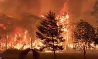 أستراليا تخلى مناطق من العاصمة كانبيرا بعد نشوب حريق غابات
