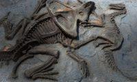 عاصفة تكشف عن آثار أقدام ديناصور عاش قبل 130 مليون عام