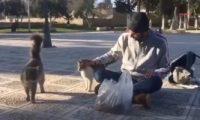 شاب فلسطينى يُطعم القطط فى ساحة المسجد الأقصى