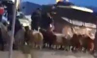 الاحتلال يحتجز قطيع ماشية قرب القدس
