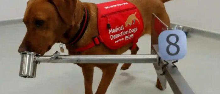 باحثون يأملون بتدريب الكلاب للكشف عن كورونا