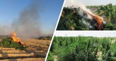 الداخلية تضبط 25 فدان زراعات مخدرات في غرب النوبارية