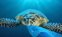 دراسة: نفايات البلاستيك بالمحيطات تعادل وزن 3 ملايين حوت أزرق بحلول 2040
